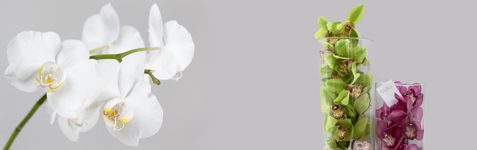 fleuriste-antibes-2